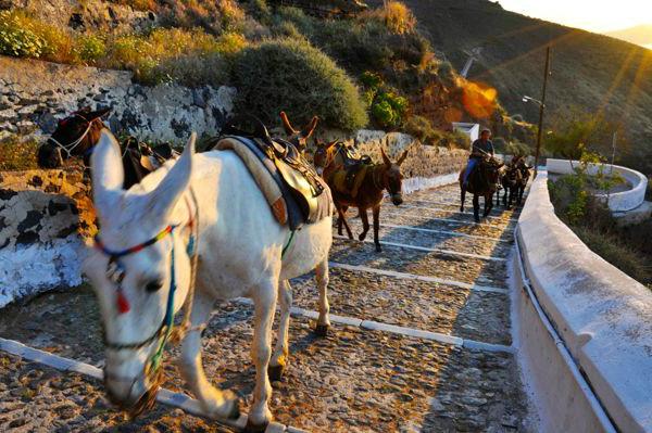 Mykonos o Santorini: ¿Cuál elegir?
