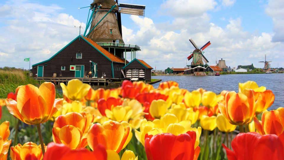 Mejores Tours y Actividades en Ámsterdam