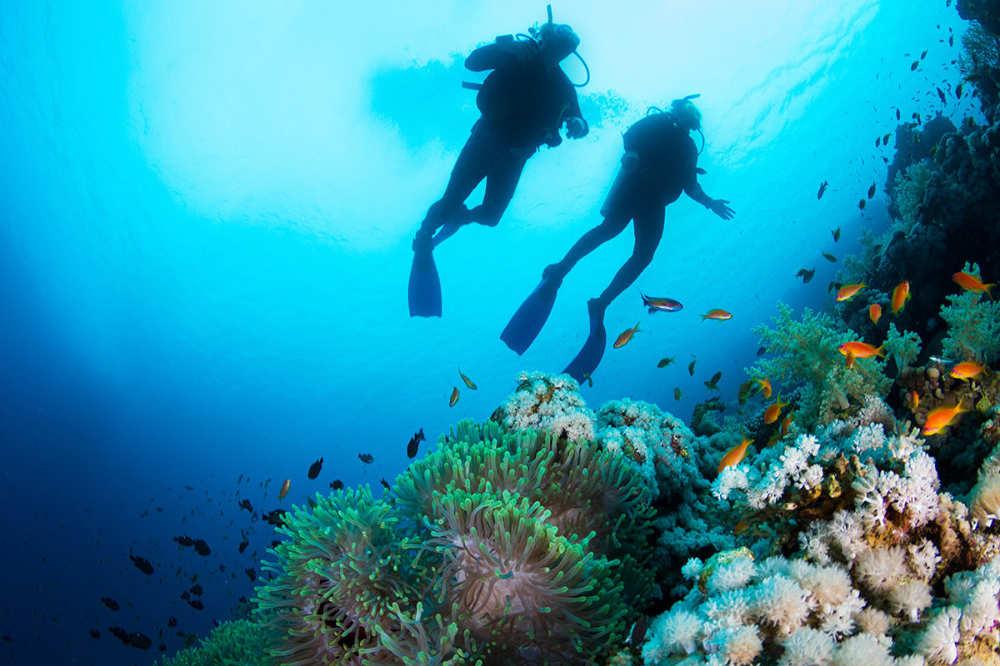 Buceo en islas fiji